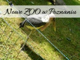 Nowe ZOO w Poznaniu. Spokojnie możesz tam spędzić cały dzień