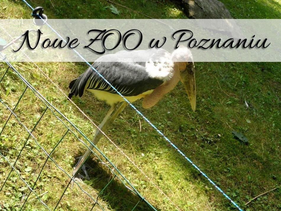 nowe_zoo_w-poznaniu