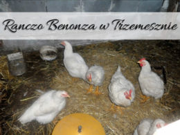 Ranczo Benonza w Trzemesznie. Niezapomniane urodziny dla dzieci w otoczeniu zwierząt
