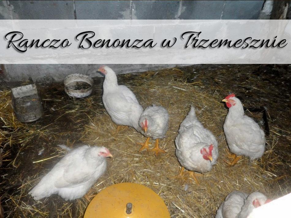 ranczo_benonza_w-trzemesznie
