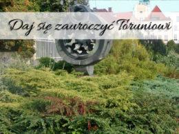 Daj się zauroczyć Toruniowi. Miasto Kopernika może Cię oczarować