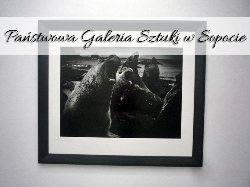 panstwowa_galeria_sztuki_w-sopocie