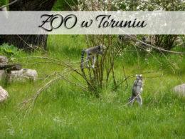 ZOO w Toruniu. Mnóstwo zwierząt całkiem niedaleko centrum miasta
