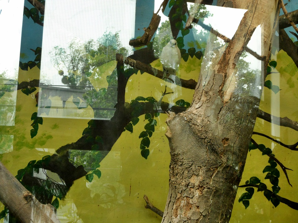 zoo_w_toruniu18