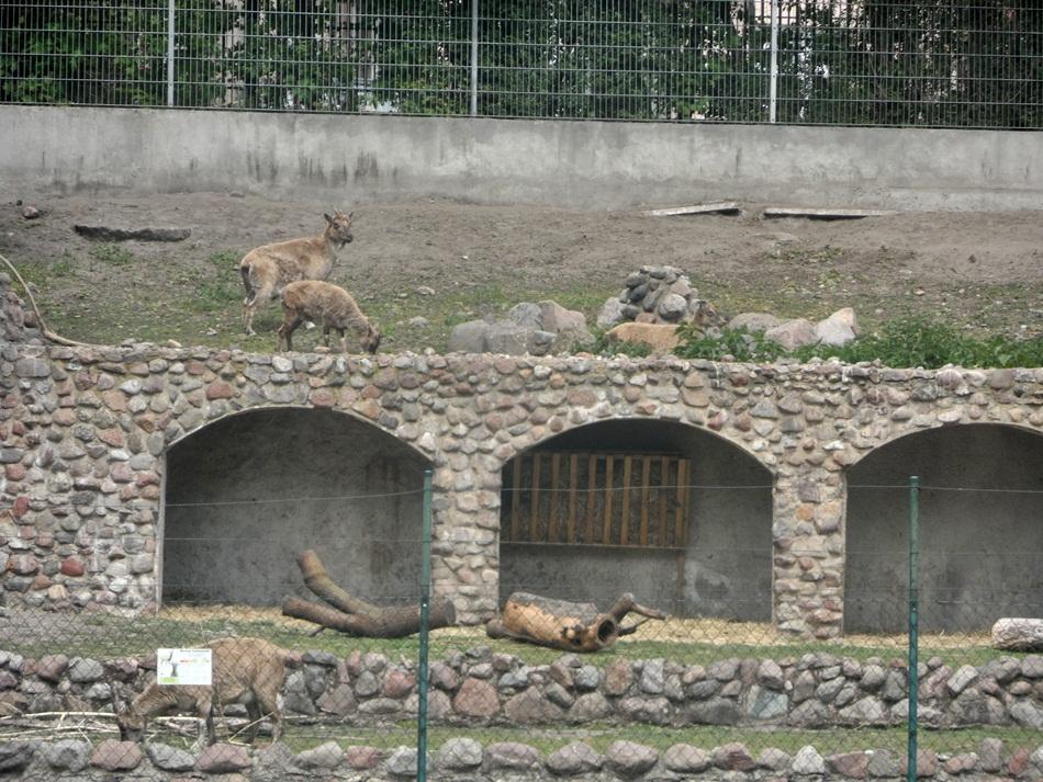 zoo_w_toruniu33