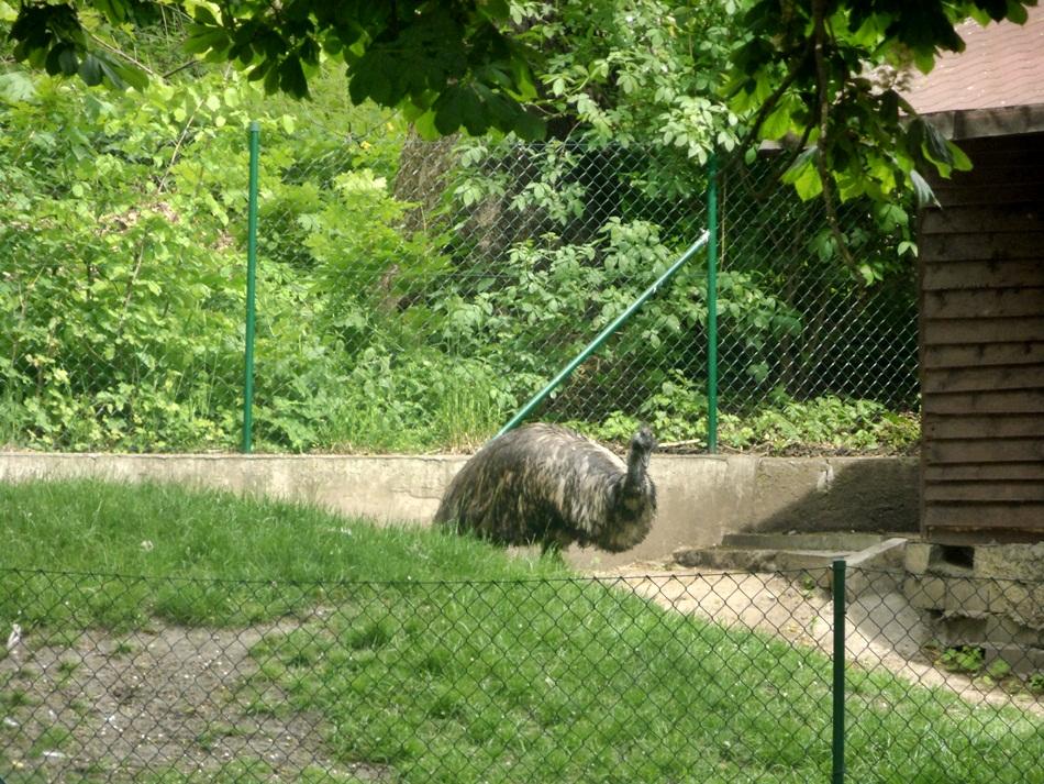 zoo_w_toruniu35