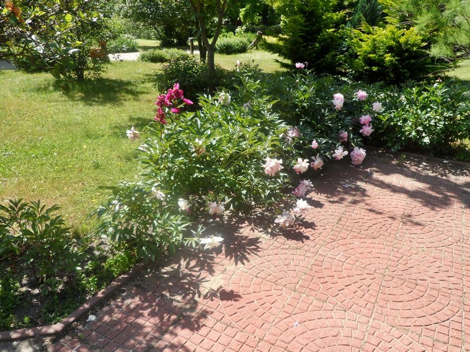 Ogród Botaniczny UKW w Bydgoszczy