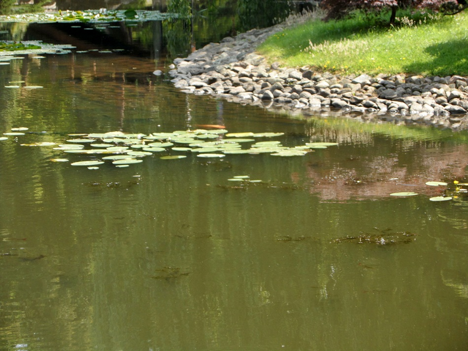 Ogród japoński we Wrocławiu