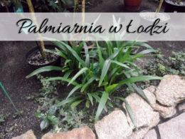 Palmiarnia w Łodzi. Dużo zieleni w niskiej cenie