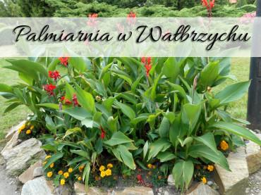 Palmiarnia w Wałbrzychu. Zobacz mnogość roślin