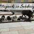 Migawki ze Świdnicy. Liczne fontanny i pomniki