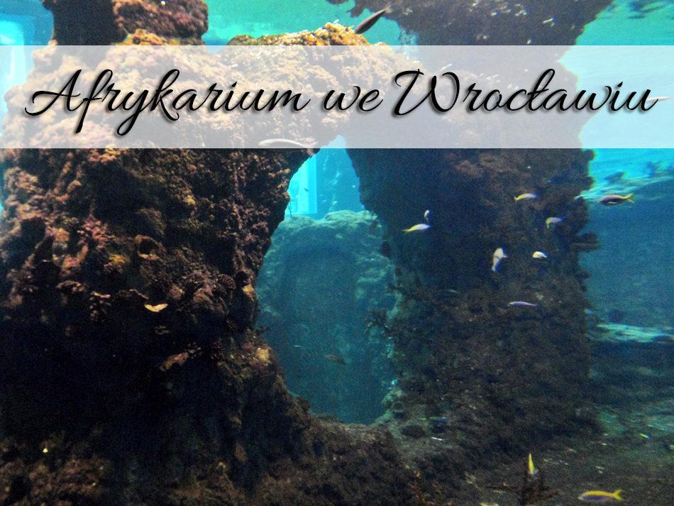afrykarium_we_wroclawiu
