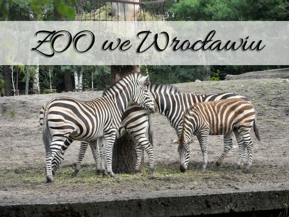 zoo-we-wroclawiu