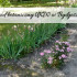 Ogród Botaniczny UKW w Bydgoszczy. Ucz się w otoczeniu przyrody