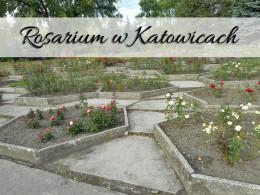 Rosarium w Katowicach. Naprawdę duże poletka róż