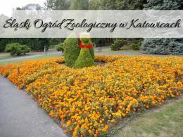 Śląski Ogród Zoologiczny w Katowicach. Cudowne miejsce