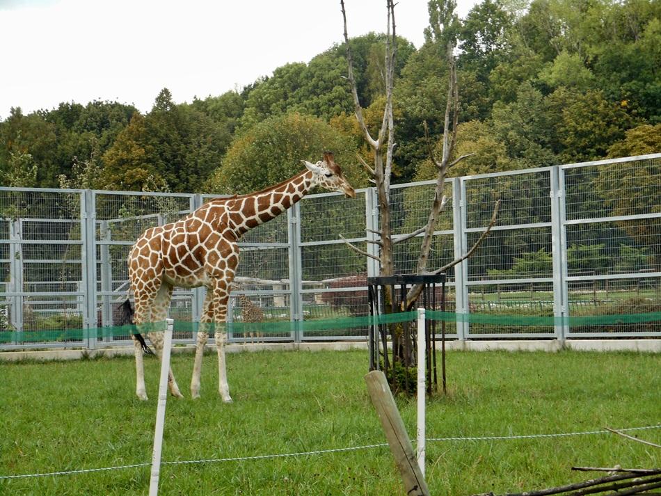 Śląski Ogród Zoologiczny w Katowicach