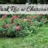 Park róż w Chorzowie. Czy faktycznie jest tam pięknie?