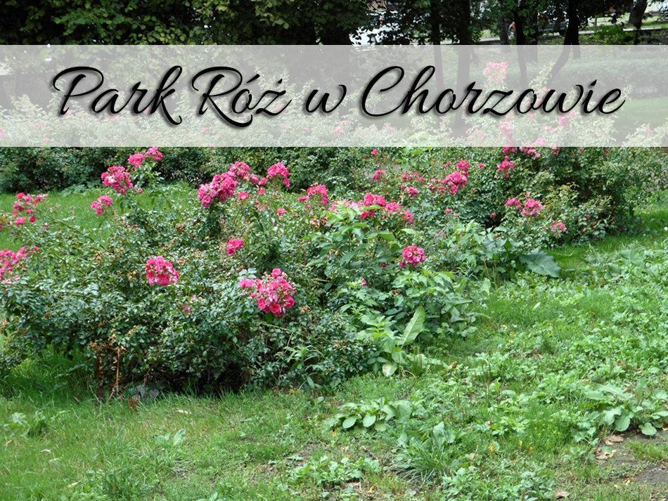 park_roz_w_chorzowie