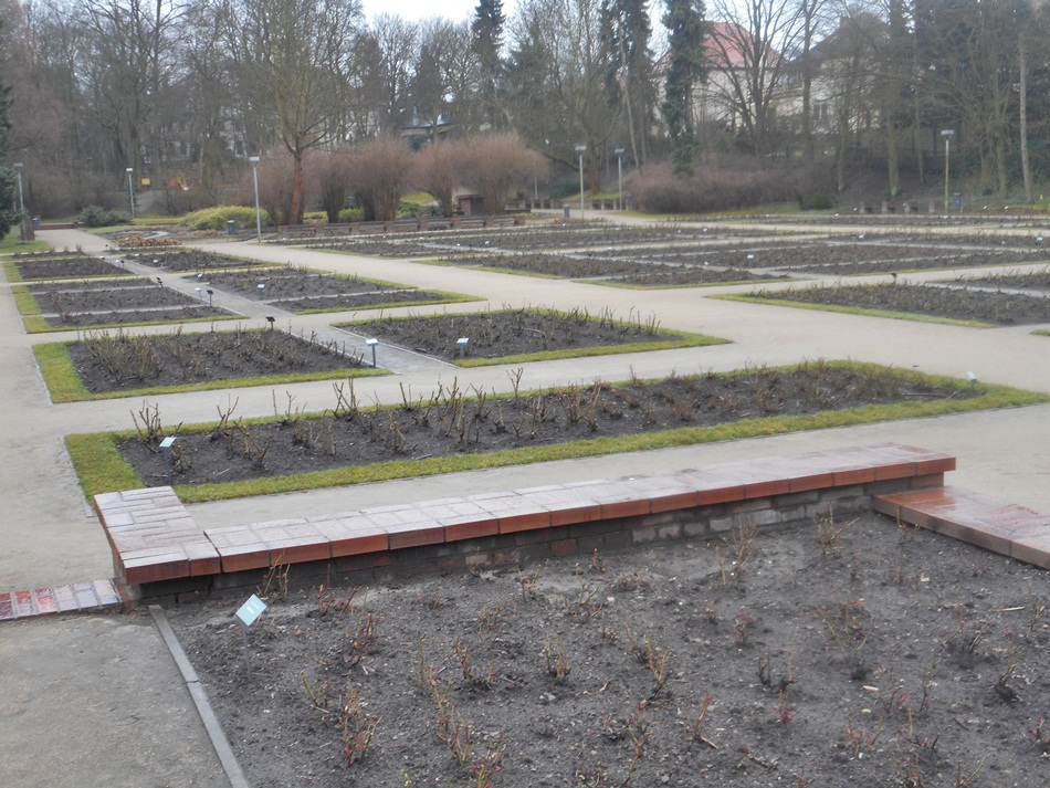park-miejski-rozanka-w-szczecinie5