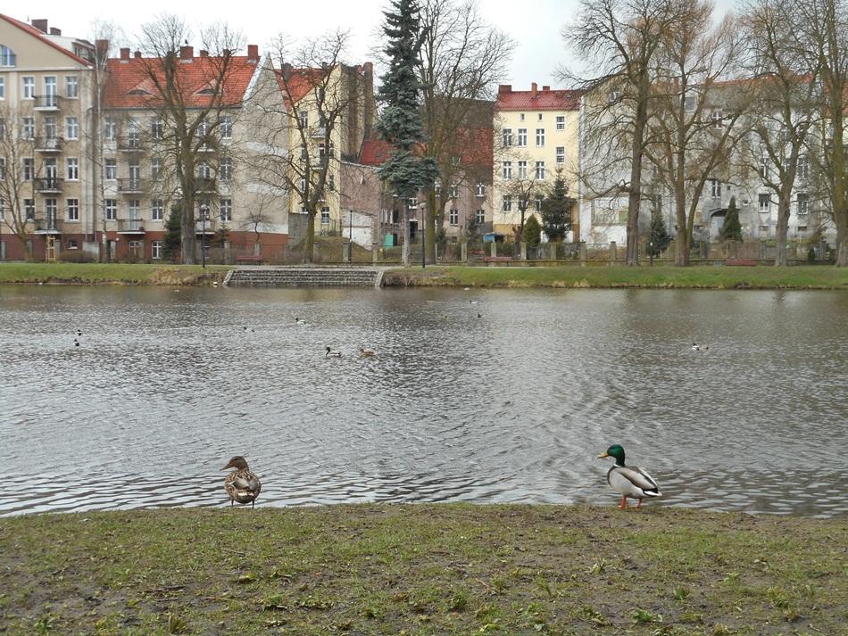 Park Wiosny Ludów w Gorzowie Wielkopolskim