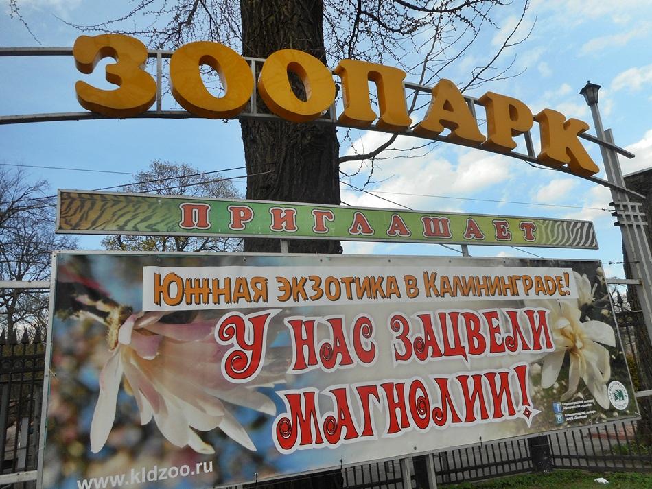 ZOO w Kaliningradzie