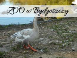 ZOO w Bydgoszczy. Zmiany na plus