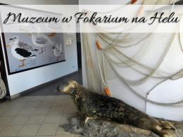 Muzeum w Fokarium na Helu. Chyba możesz zapłacić za nie złotówkę?