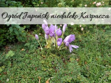 Ogród japoński niedaleko Karpacza. Jedyna taka atrakcja w okolicy