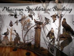 Muzeum Spichlerz w Brodnicy. Darmowa atrakcja miasta