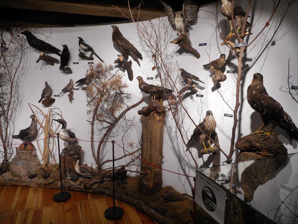 Muzeum Spichlerz w Brodnicy