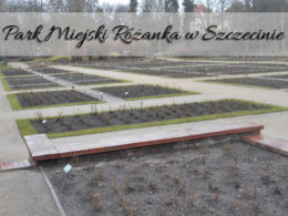 Park miejski Różanka w Szczecinie. Coś mało tam tych róż…