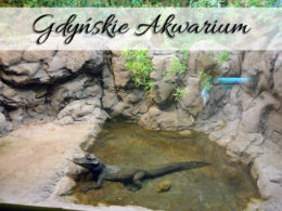 Akwarium Gdyńskie. Czy atrakcja jest warta swojej ceny?