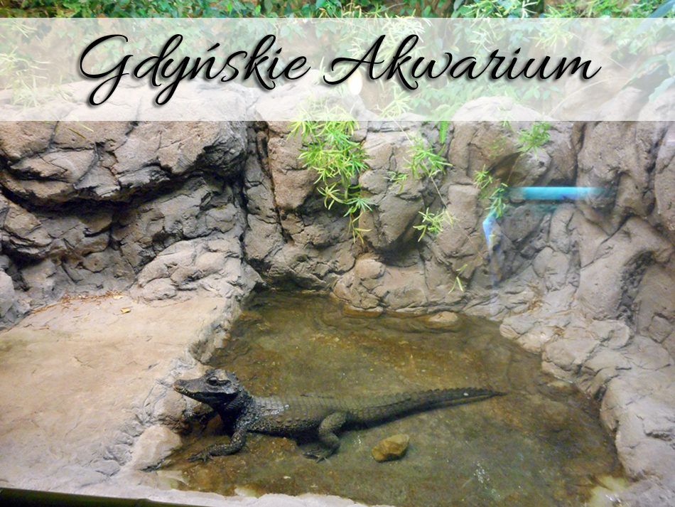 Gdyńskie Akwarium