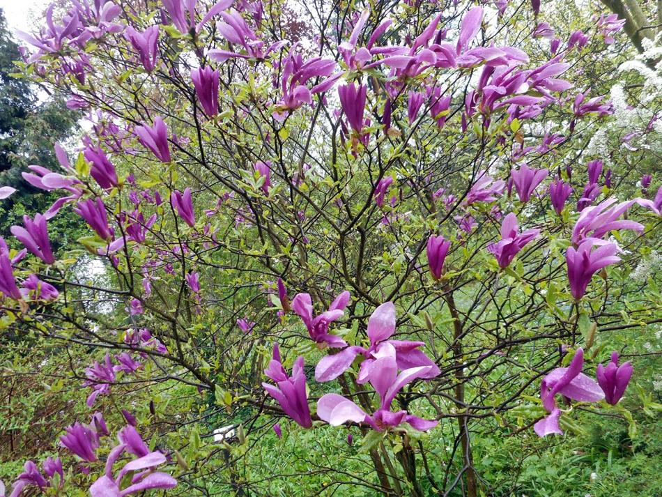 arboretum-w-korniku29