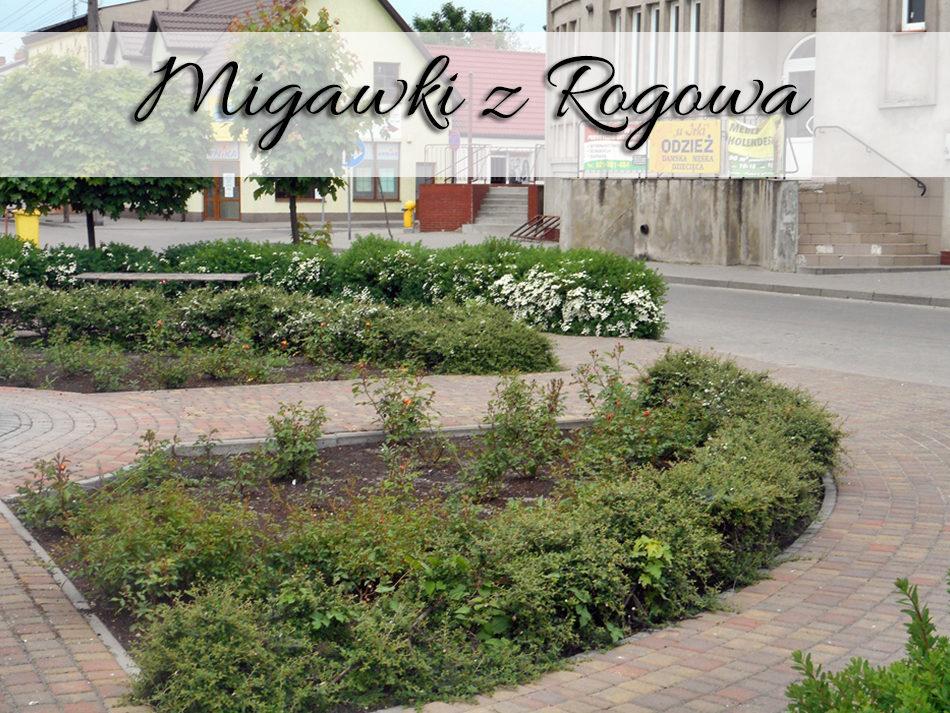 migawki-z-rogowa2
