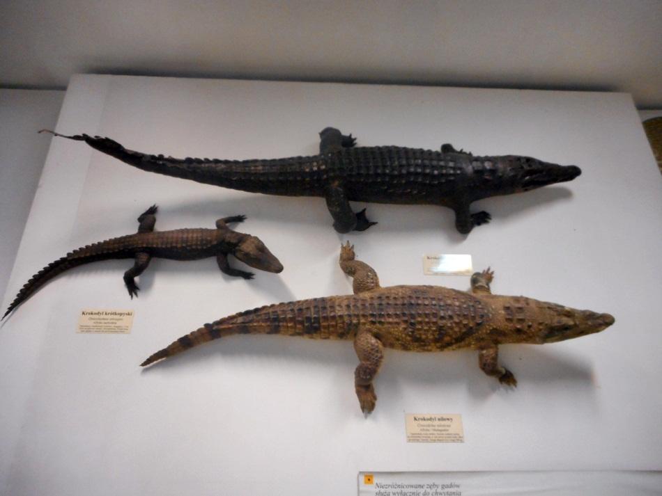 Muzeum Przyrodnicze Uniwersytetu Łódzkiego