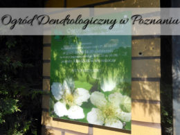 Ogród Dendrologiczny w Poznaniu. Nie daj się zmylić i dojdź do celu