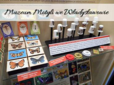 Muzeum Motyli we Władysławowie. Mało zwiedzania za dużą cenę