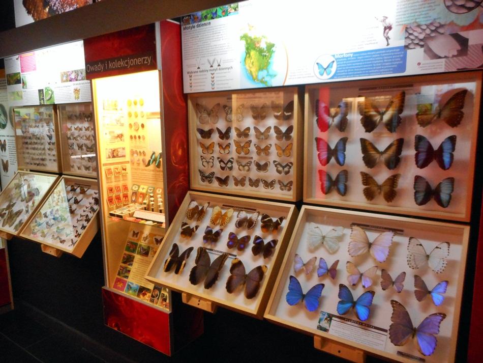 Muzeum Motyli we Władysławowie