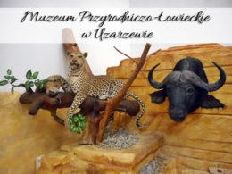 Muzeum Przyrodniczo-Łowieckie w Uzarzewie. Atrakcja dla ludzi w każdym wieku