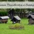Muzeum Pszczelarstwa w Swarzędzu. Ciekawe miejsce nie tylko dla miłośników pszczół