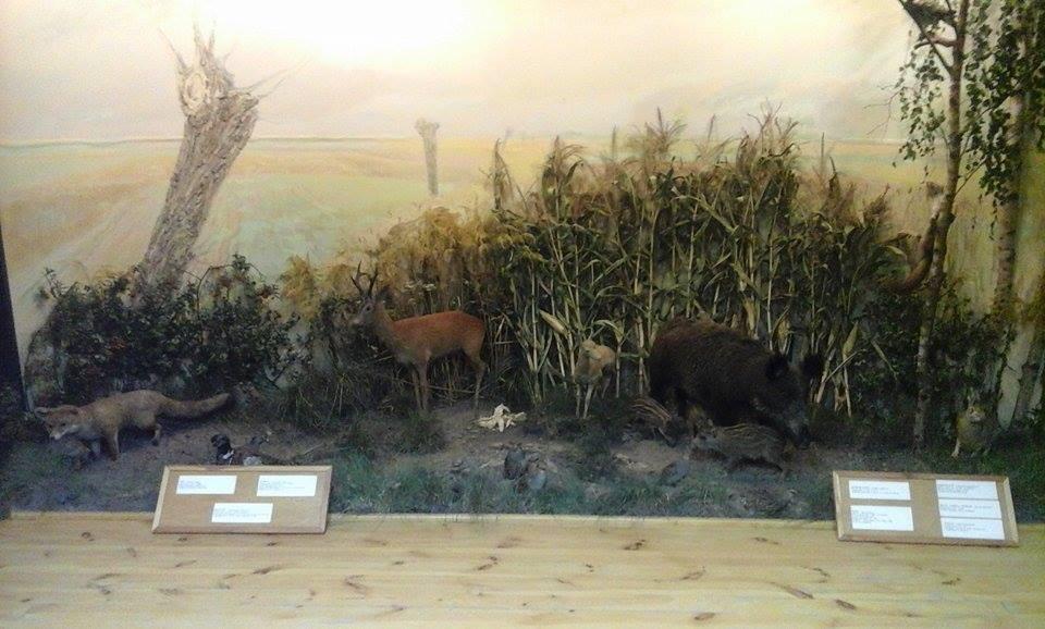 Muzeum Przyrodniczo-Łowieckie w Uzarzewie