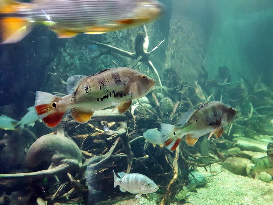 Oceanika w Chrustach