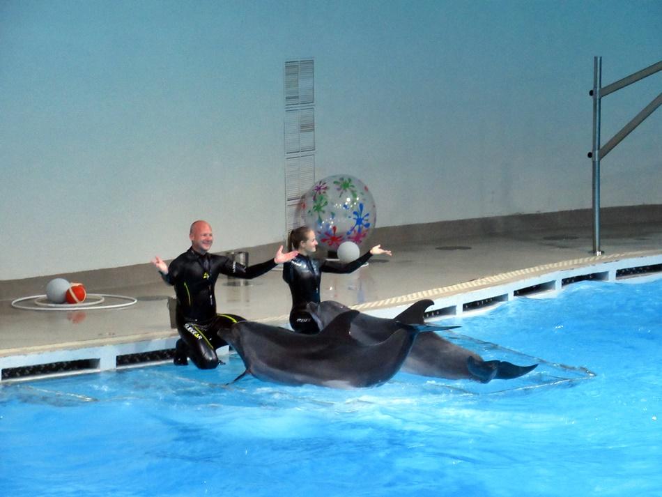Delfinarium w Kłajpedzie