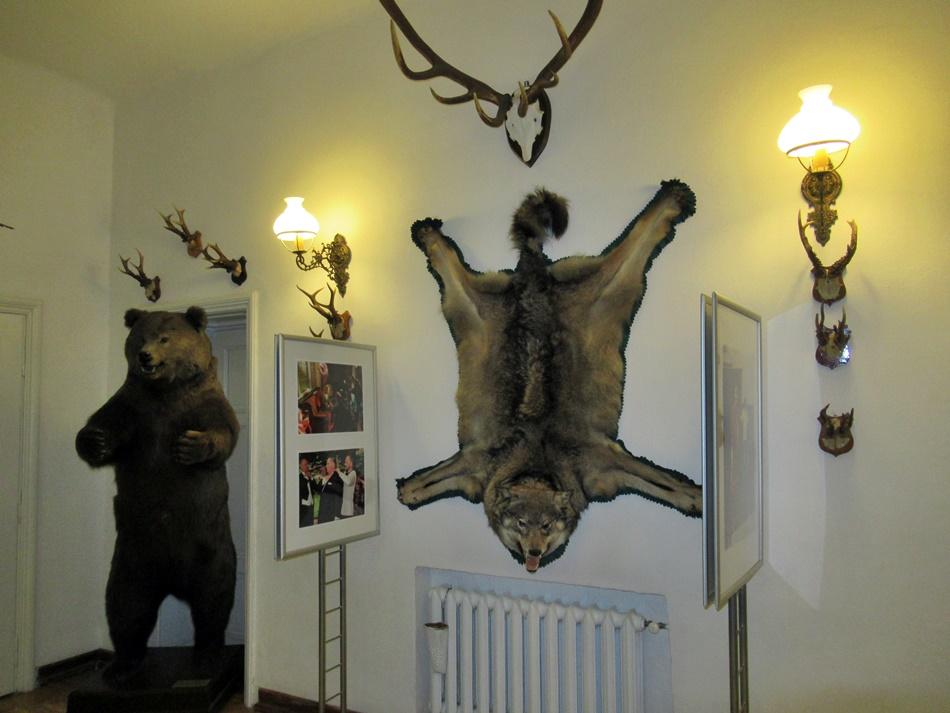 Muzeum Przyrody w Drozdowie
