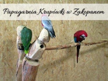Papugarnia Krupówki w Zakopanem. Czy warto tam zajrzeć?