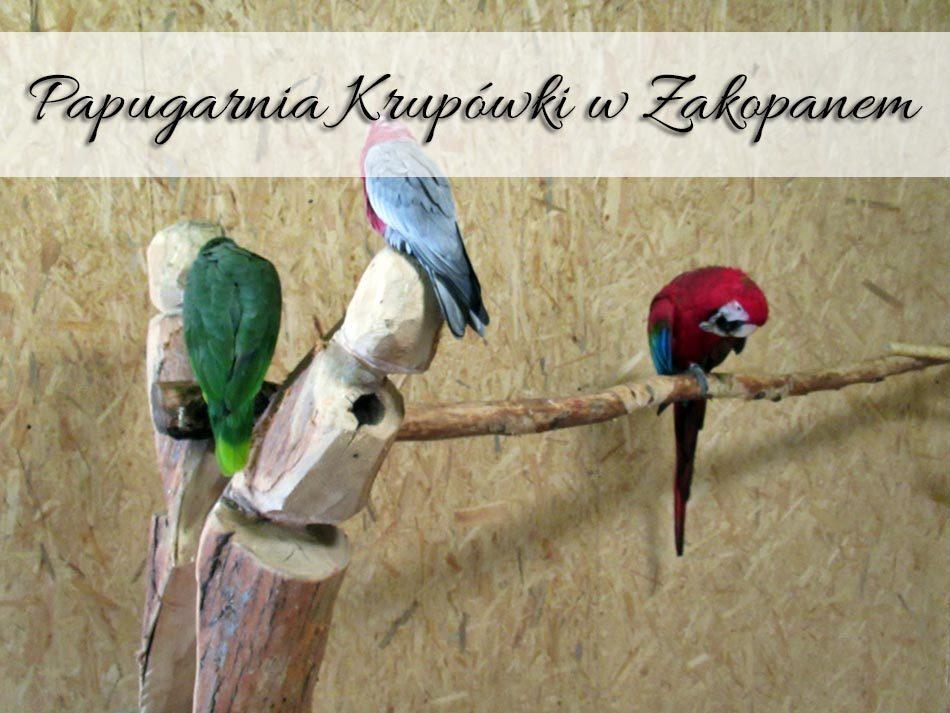 Papugarnia-Krupowki-w-Zakopanem