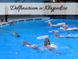 Delfinarium w Kłajpedzie. Cudowna atrakcja za 9 euro!