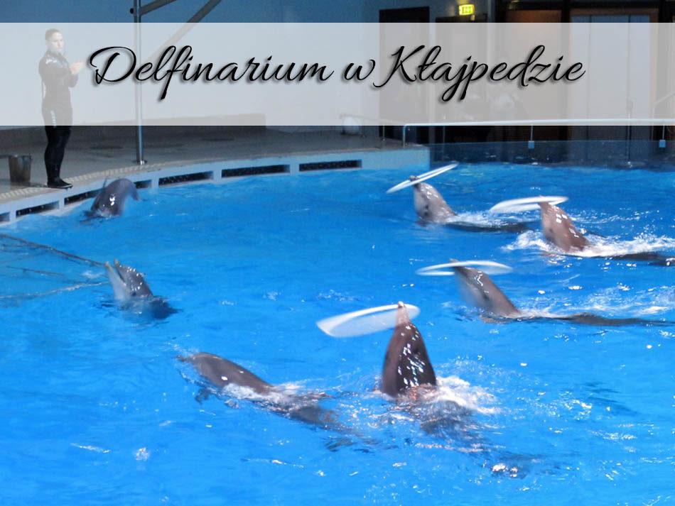 Delfinarium-w-Klajpedzie